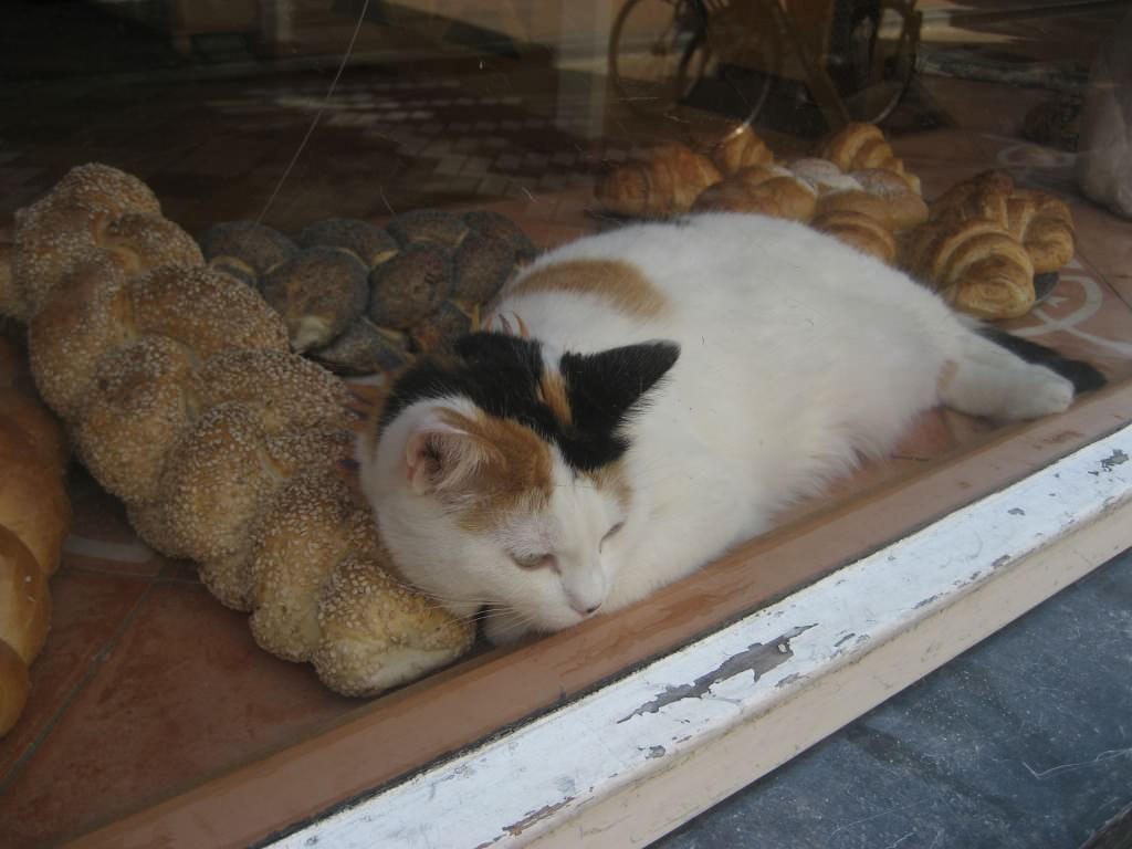 Cat in Amsterdam bread shop window