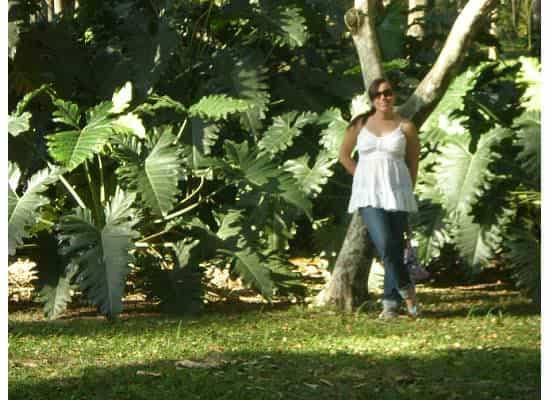 Jardin Botanico Rio