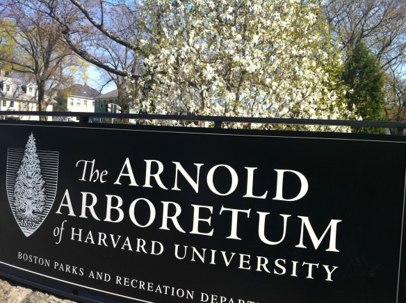 the Arnold Arboretum, Visiting Boston in the Spring