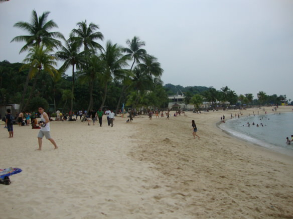 palm trees on the beach in Singapore