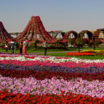Largest flower garden in the world? Miracle Gardens Dubai