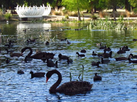 Ballarat, Lake Wendouree buy travel insurance