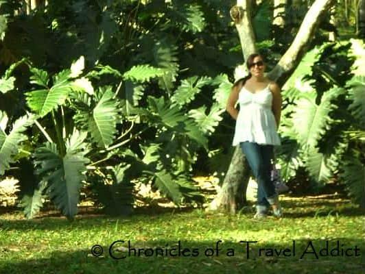 At the Jardin Botanico (Botanical Gardens) in Rio de Janeiro