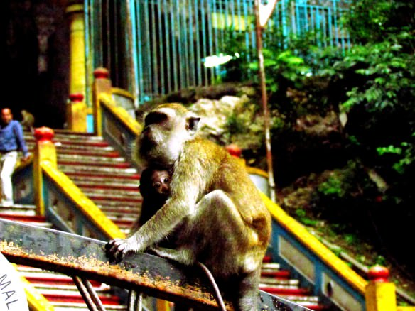 Batu Caves - Monkeys!