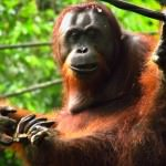 Malaysia: Mega Malls, Monkeys, Relics and Rain Forests. Oh My!
