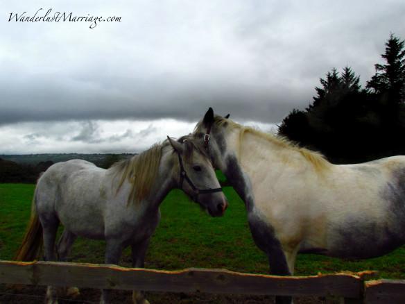 Killarney Horses telling secrets