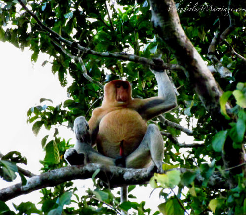 Exotic Animals of Borneo