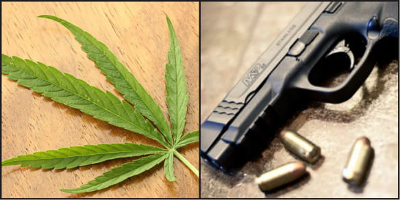 photo of marijuana leaf and handgun to highlight police differences