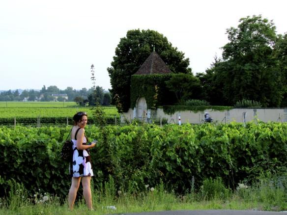 Saint Emilion Vineyards