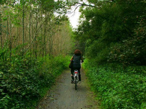 It doesn't take long to reach the Belgian forest by bike from Leuven.