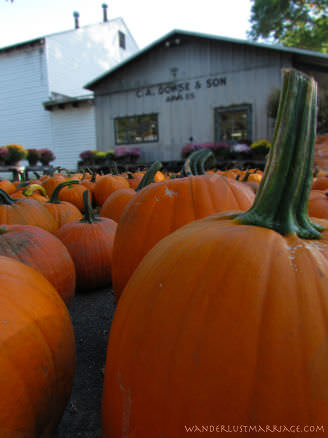 Pumpkins from the farm