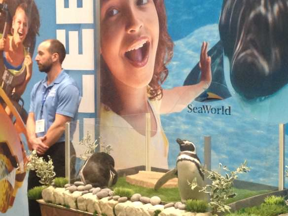 Sea World Penguins, NY Times Travel Show