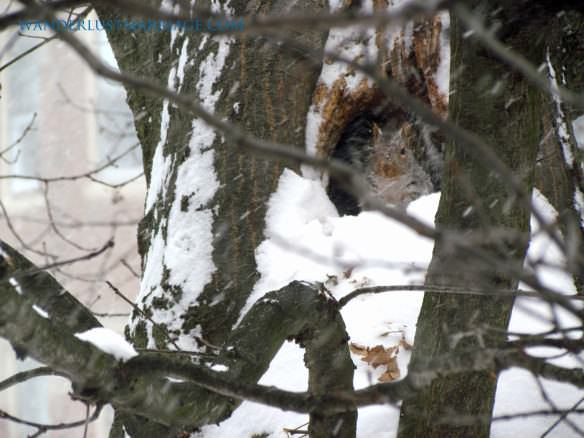 Our neighbor squirrel digs out of the snow