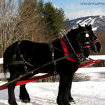 A Horse Drawn Sleigh Ride in New Hampshire