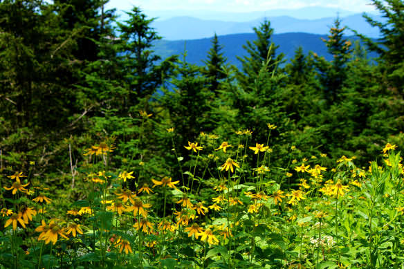 Blue Ridge Mountain Flowers