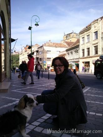 cute wild dog on Romanian street