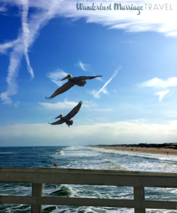 pelicans flying near the pier and beach in Florida