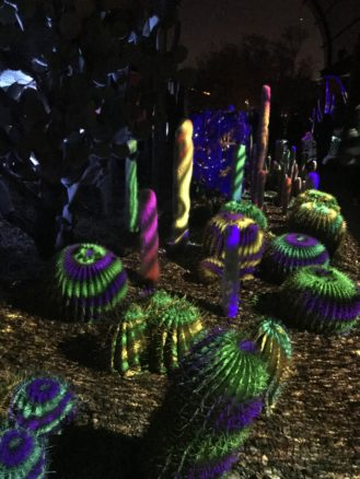 Cactus lit up with lights as part of electronic desert in Phoenix