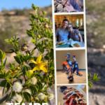 Tempe: A Great Base to Explore Arizona