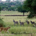 Epic 4 Day Luxury Tanzania Safari Tour