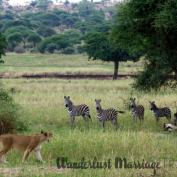 safari holidays Africa