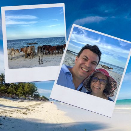 Collage of pictures on the white sand beach including one with cows on the beach