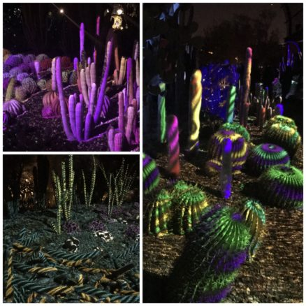 Collage of the cactus with colorful lights at night