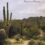 Tempe: Things to Do While Exploring Arizona