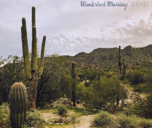 cactuses in South Mountain Park and Preserve in Tempe, Arizona
