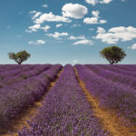 South of France: 20 Great Destinations