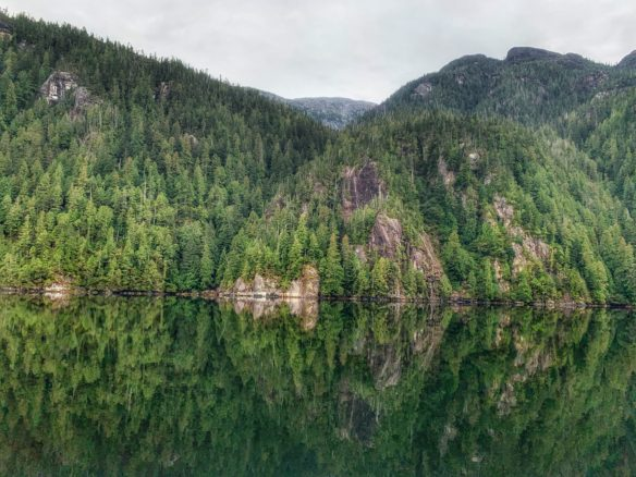 Dense forest reflecting back in the still Waters of Misty Fjords national park