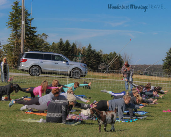 Outdoor yoga with goats wandering around
