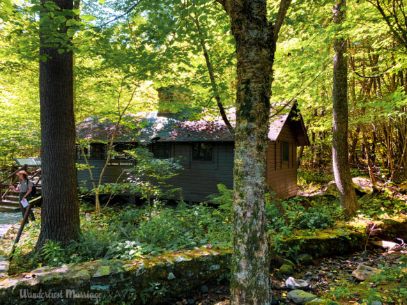 Cabin in the woods, surrounded by beautiful green trees
