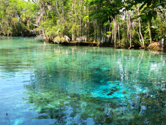 turquoise water and palm trees at Three Sisters Spring, Florida