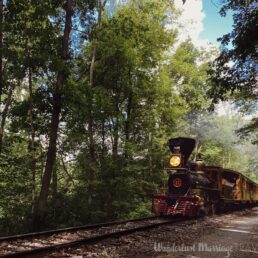 An old steam train going through the trees with a red grill on the front