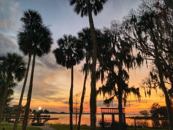 Colorful sunset with palm trees on Lake Dora, in Mount Dora, Florida